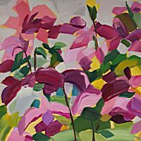 Pink Clematis | Shona Barr