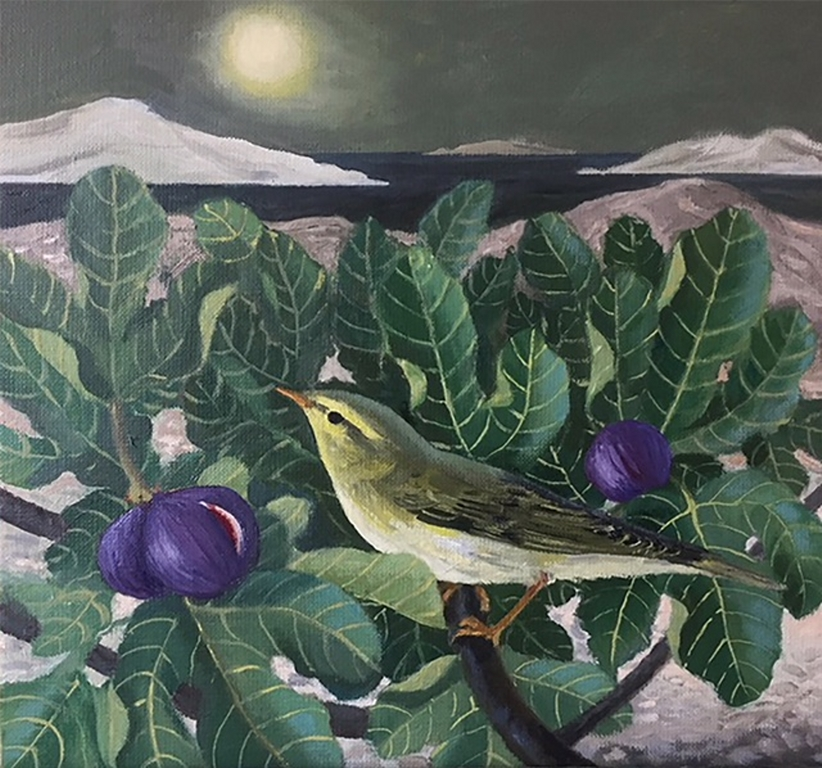 Greek Finch | Eleanor Fein
